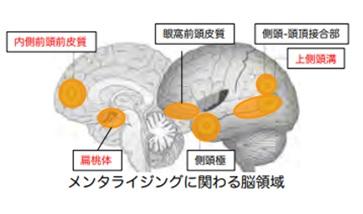 メンタライジングに関わる脳領域