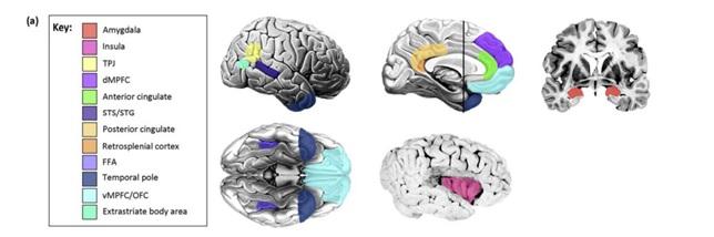 脳領域の図