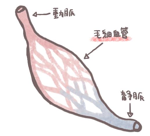 毛細血管と赤面症の関係
