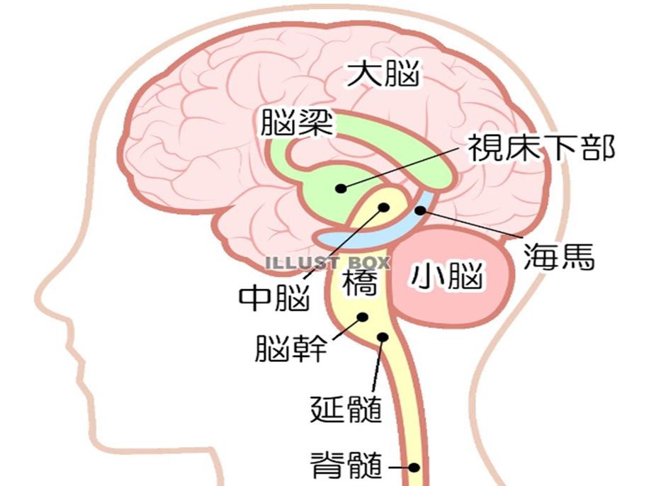 脳の各機能