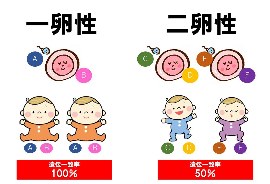 双生児法の解説